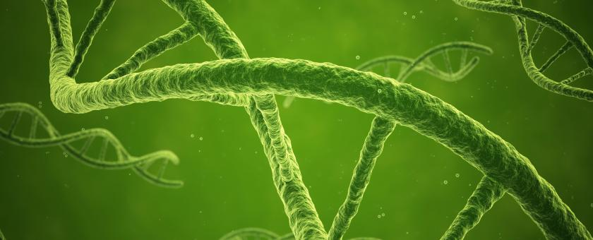 Enlarged view of DNA strands