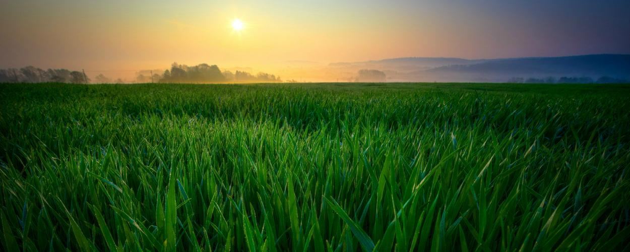 The sun blazes low in the sky over a field of tall green grass.