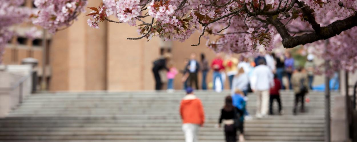 People climb an outdoor staircase on a college campus with cherry trees in bloom.