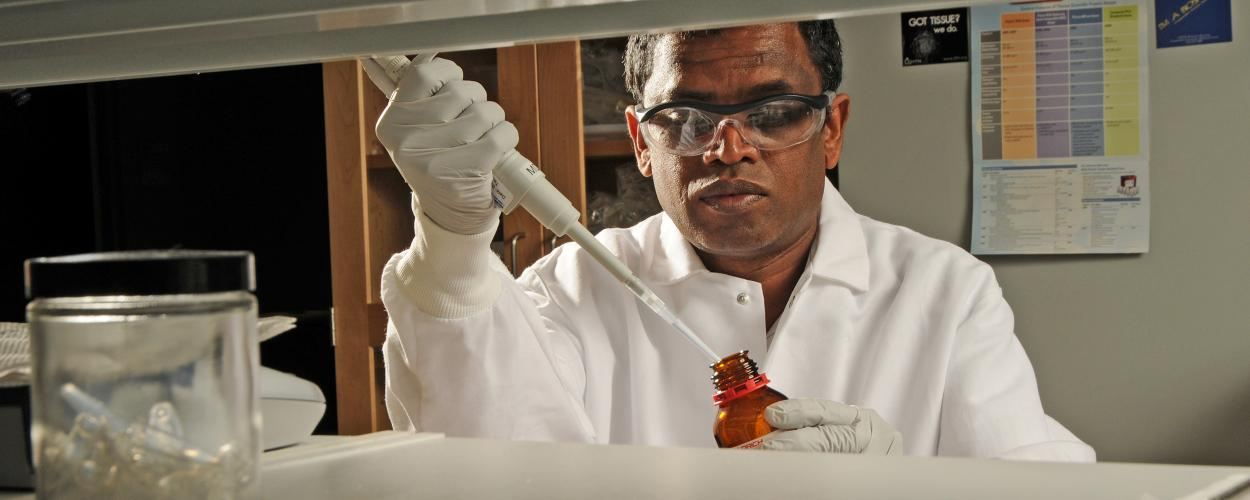Research biochemist Wimal Pathmasiri in the lab