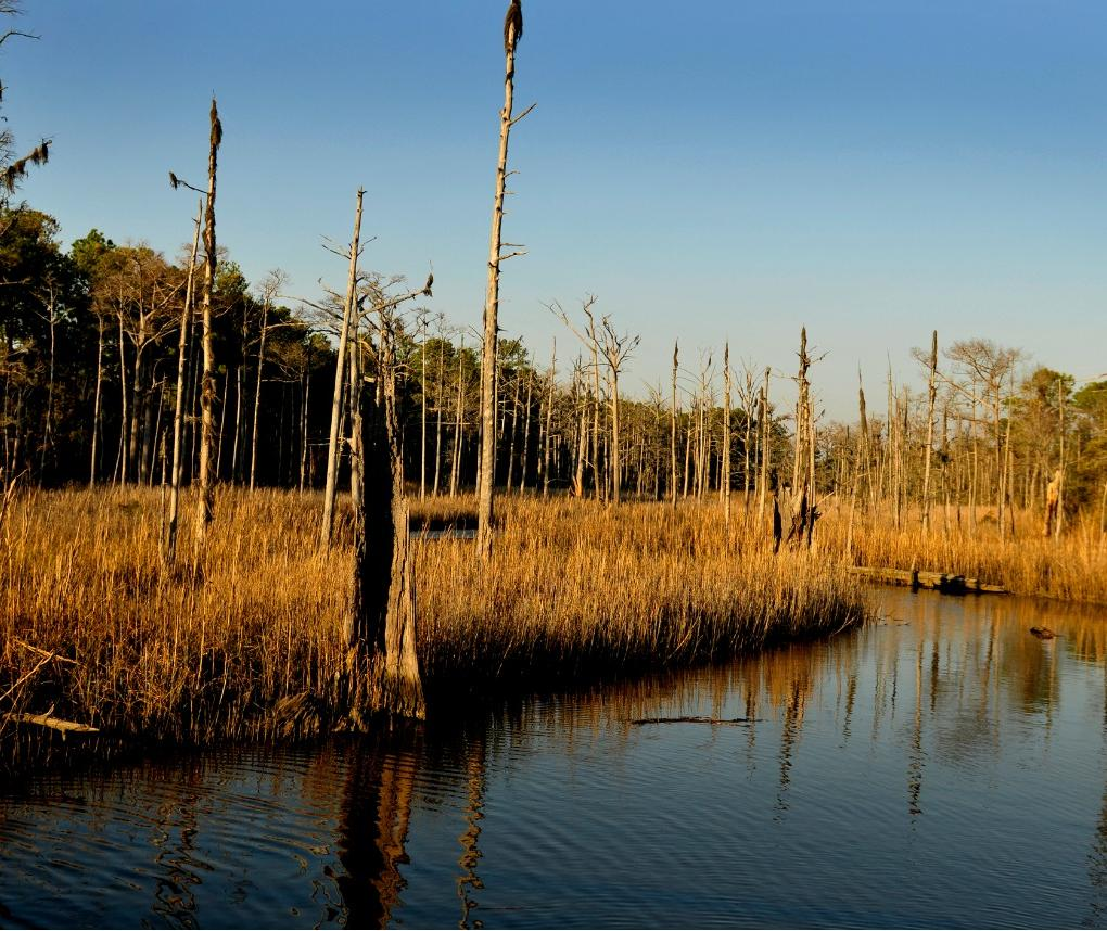 saltwater marsh north carolina